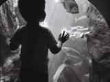 aquarium océanopolis