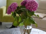 Découvrez le charme des fleurs de la région